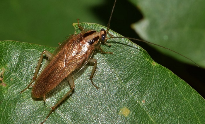Dreams About Roaches – Interpretation and Meaning