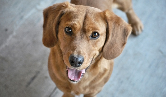 Dreams About Brown Dog – Interpretation and Meaning