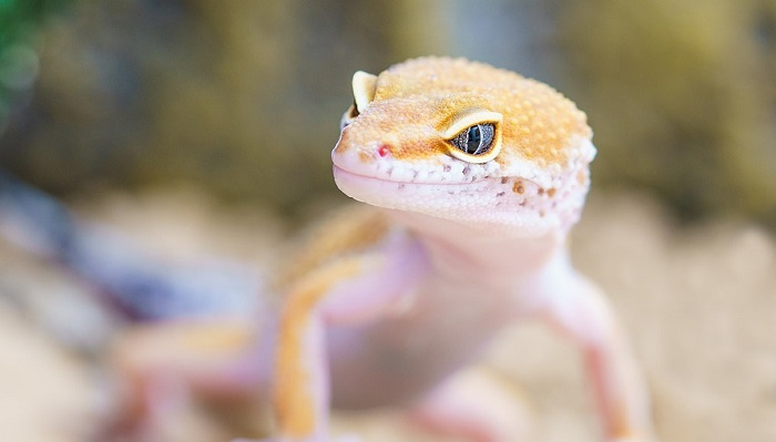 Gecko Spirit Animal Totem Symbolism And Meaning