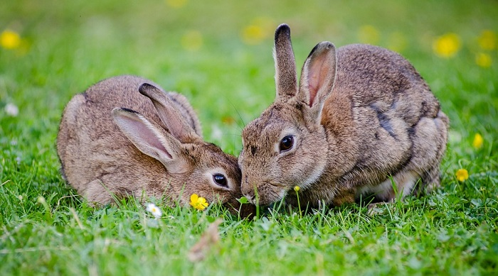Biblical Meaning of Rabbits in Dreams – Interpretation and